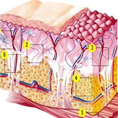 MICROCIRCOLO-CELLULITE