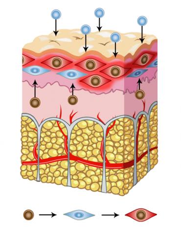 pressione-osmotica-sale-sulla-pelle-1-370x464